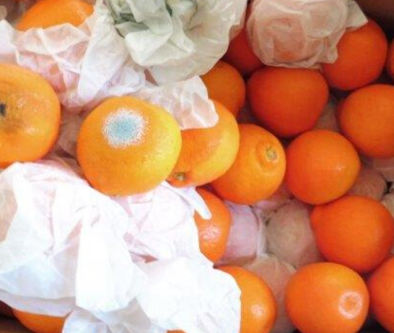 Why fruit damage claims are rejected by shipping lines