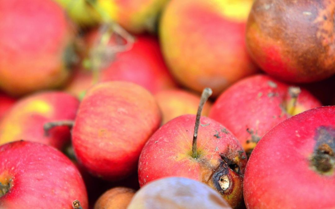 Tips on how to handle a fruit damage claim